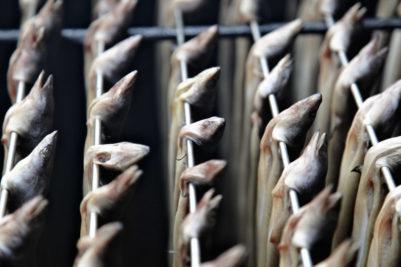 Gerookte paling, het hele verhaal bij palingpraat, woensdagmiddag Olde Ambaecht Hoorn Terschelling